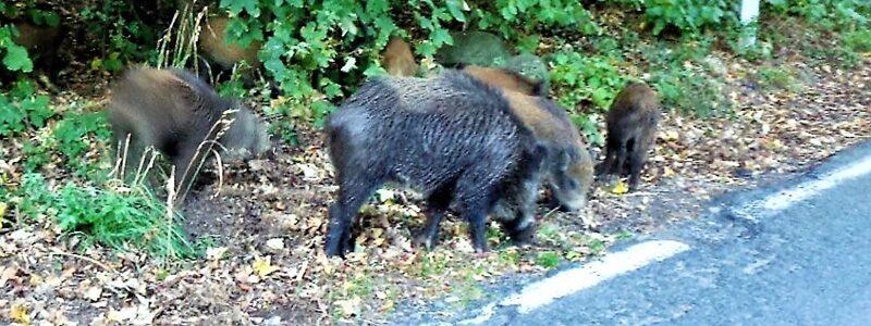 incidenti stradali, fauna selvatica, regione liguria