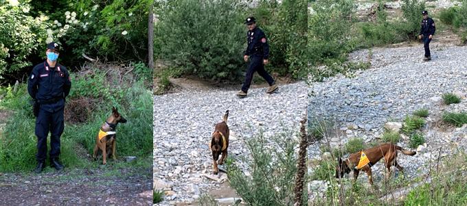 carabinieri casale monferrato, carabinieri alessandria, cronaca