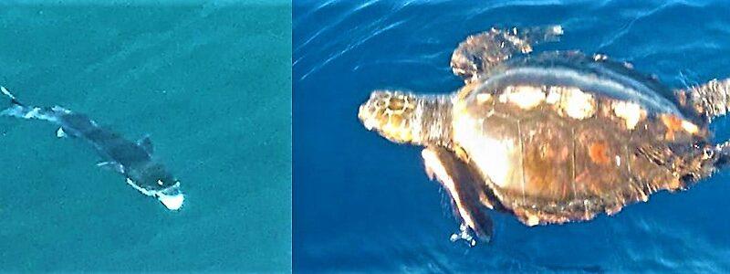santuario cetacei liguria, codamozza, enpa, ambiente