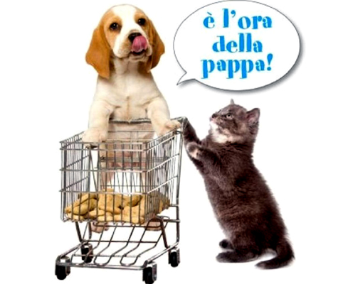 raccolta cibo animali