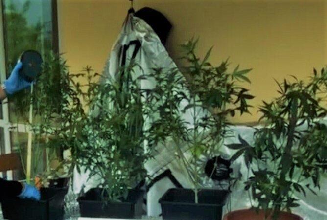 carabinieri quiliano, marijuana