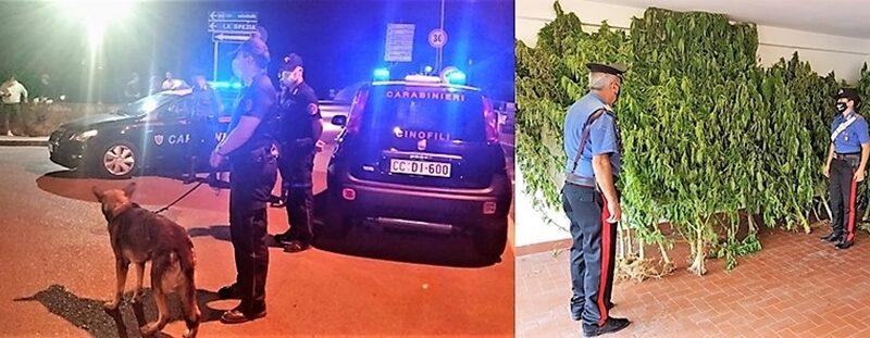 carabinieri la spezia, carabinieri cinofili albenga, cronaca, cinque terre