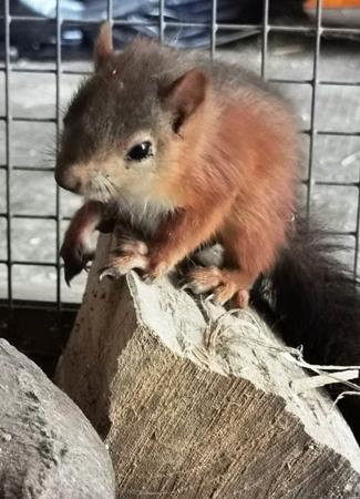 enpa savona, scoiattolo toirano, cronaca
