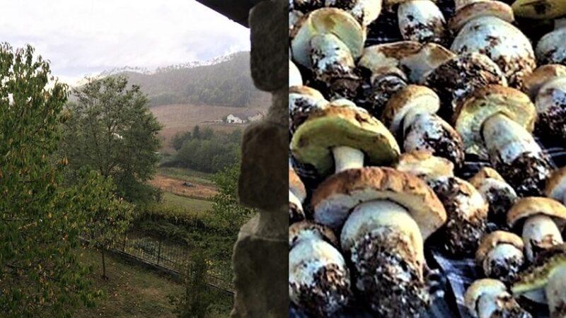 funghi sassello