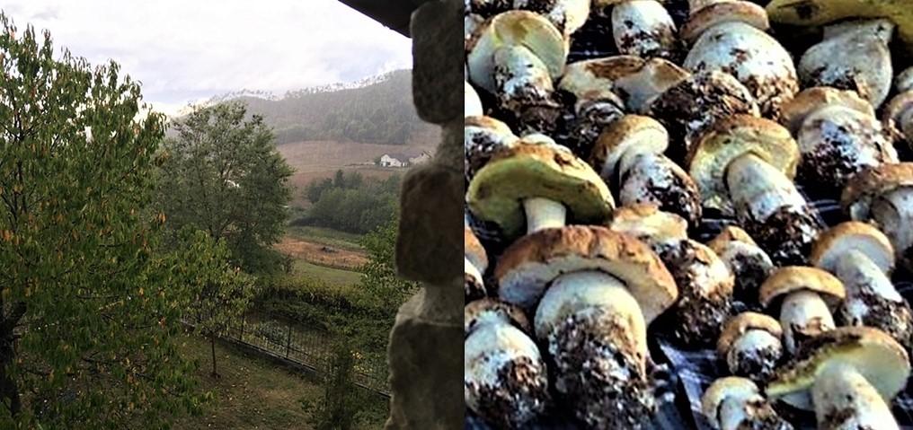 """A Sassello piove di brutto, """"arrivano"""" i funghi porcini"""
