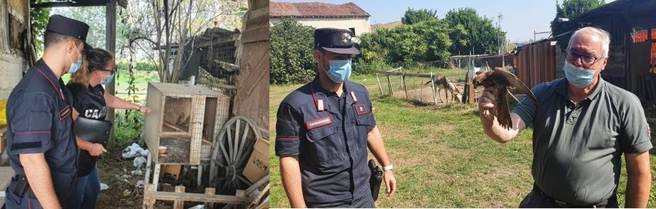 58enne denunciato da Carabinieri Forestale di Alessandria per la cattura di due falchi protetti