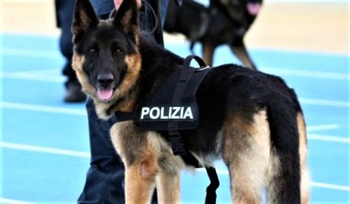 34enne savonese nascondeva un fucile rubato nel 2018, grazie al cane Leo trovate altre armi, arrestato