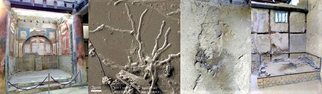 Pompei eruzione 79 d.C. nuove scoperte, trovati neuroni nel cervello vetrificato di una vittima
