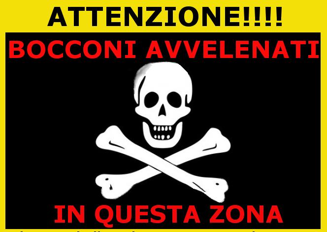 Savona, cibo avvelenato in corso Ricci, appello della Protezione Animali