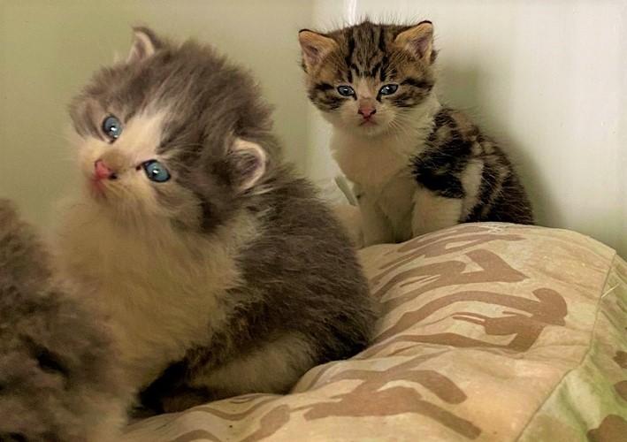 Vado Ligure. Mamma e tre cuccioli di gatto investiti sulla superstrada