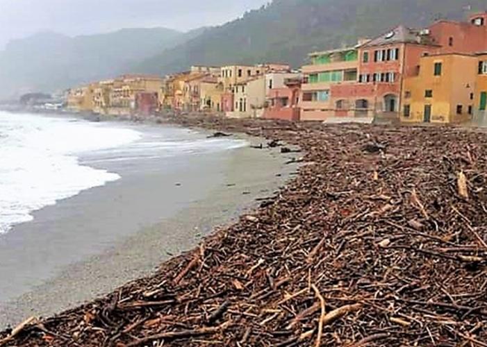 Loano e Albenga autorizzano il ritiro per uso privato della legna spiaggiata