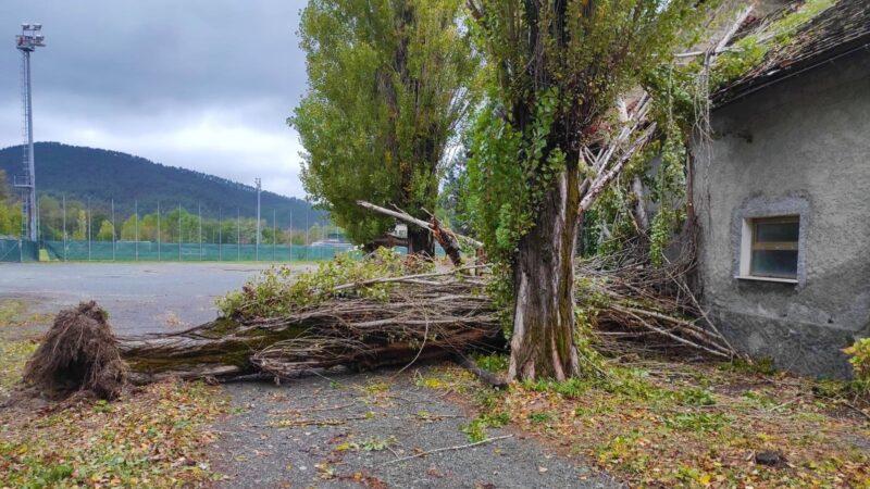 sassello caduto un albero