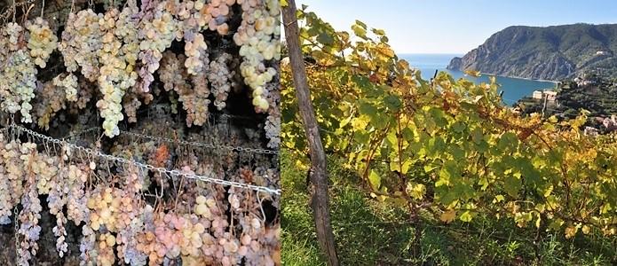 """Liguria. I carabinieri controllano i vini """"Cinque Terre"""" e """"Cinque Terre Sciacchetrà"""""""