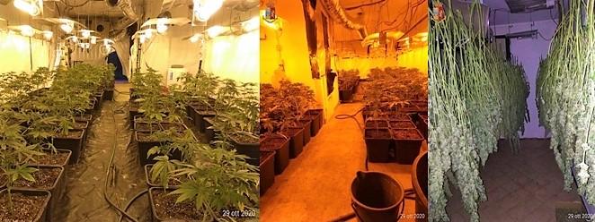 Beccati con 47 chili di droga destinati al mercato illegale tra Cuneo e Asti