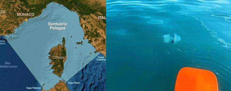 enpa savona, santuario dei cetacei, pelagos