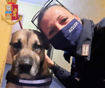 Genova cronaca breve. Dall'ubriaca che colpisce una poliziotta al cane salvato da un incendio