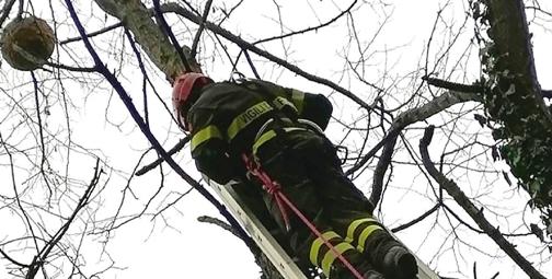 Vigili del fuoco bonificano un nido di vespe velutine nello spezzino