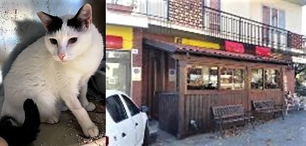 cronaca carcare, gatto pina, bar caffè