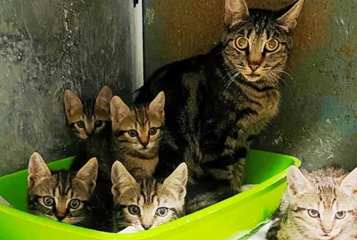 enpa savona, raccolta cibo cani gatti