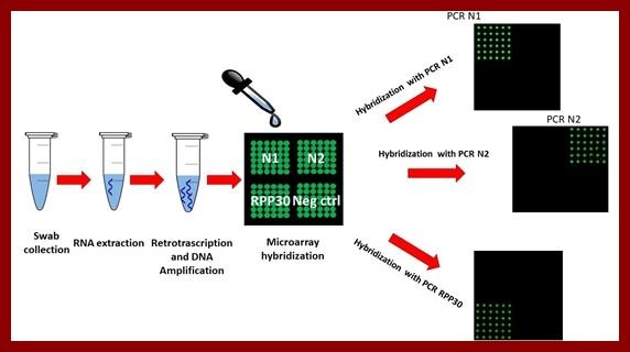 Cnr crea il test CovidArray per scoprire il Sars-CoV-2 nei tamponi