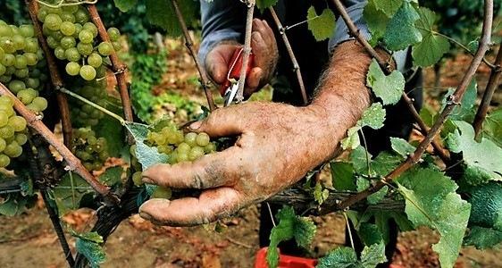 Unione Europea vuole il vino senza vino ma con l'acqua