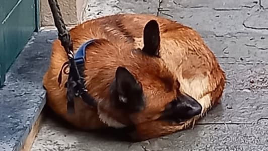 Sequestrato un cane in via Prè per maltrattamenti, 26enne denunciata