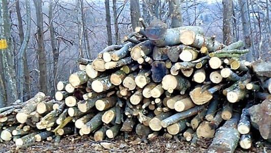 Il taglio del bosco nelle aree protette, ne parla Buschiazzo del Beigua