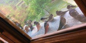 uccellini al riparo sul davanzale